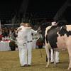 Royal16_Holstein_1M9A1776