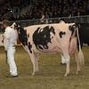 Royal16_Holstein_1M9A1637