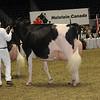 Royal16_Holstein_1M9A1275