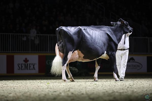 Royal16_Holstein_1M9A1515