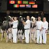 Royal16_Holstein_L32A4890