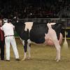 Royal16_Holstein_1M9A1771