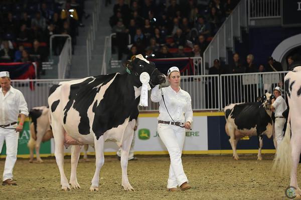 Royal16_Holstein_L32A4755
