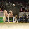 Royal16_Holstein_L32A4873