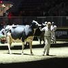 Royal16_Holstein_L32A4925