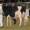 Royal16_Holstein_1M9A1333