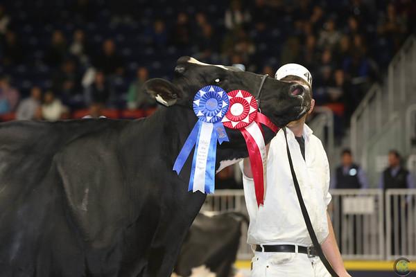 Royal16_Holstein_L32A4828