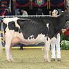 Royal16_Holstein_L32A4899