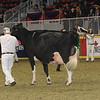 Royal16_Holstein_1M9A1327