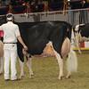 Royal16_Holstein_1M9A1358