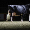 Royal16_Holstein_1M9A1510