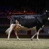Royal16_Holstein_1M9A1597