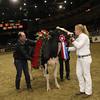 Royal16_Holstein_1M9A1840