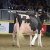 Royal16_Holstein_1M9A1469