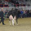 Royal16_Holstein_1M9A1436