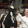 Royal16_Holstein_1M9A1228