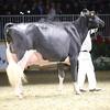 Royal16_Holstein_1M9A1475