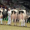 Royal16_Holstein_L32A4712