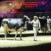 Royal16_Holstein_L32A4924