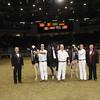 Royal16_Holstein_1M9A1823