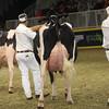 Royal16_Holstein_1M9A1642