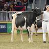 Royal16_Holstein_L32A4768