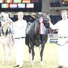 Royal16_Holstein_L32A4919