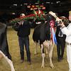 Royal16_Holstein_1M9A1831