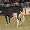 Royal16_Holstein_1M9A1423