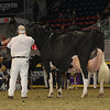 Royal16_Holstein_1M9A1335