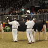 Royal16_Holstein_1M9A1629