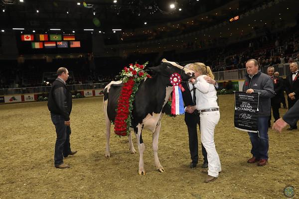 Royal16_Holstein_1M9A1844