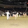 Royal16_Holstein_1M9A1213