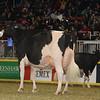 Royal16_Holstein_1M9A1340