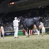 Royal16_Holstein_1M9A1725