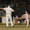 Royal16_Holstein_1M9A1337
