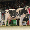 Royal16_Holstein_L32A4764
