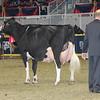 Royal16_Holstein_1M9A1329