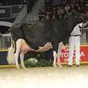 Royal16_Holstein_L32A4906
