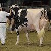 Royal16_Holstein_1M9A1288
