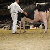 Royal16_Holstein_1M9A1180
