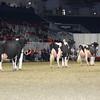 Royal16_Holstein_L32A4983