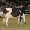 Royal16_Holstein_1M9A1248