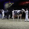 Royal16_Holstein_L32A4937