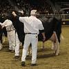 Royal16_Holstein_1M9A1263