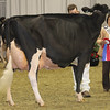 Royal16_Holstein_1M9A1439