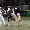 Royal16_Holstein_1M9A1717