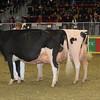 Royal16_Holstein_1M9A1451