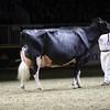 Royal16_Holstein_1M9A1505