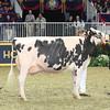Royal16_Holstein_L32A4913
